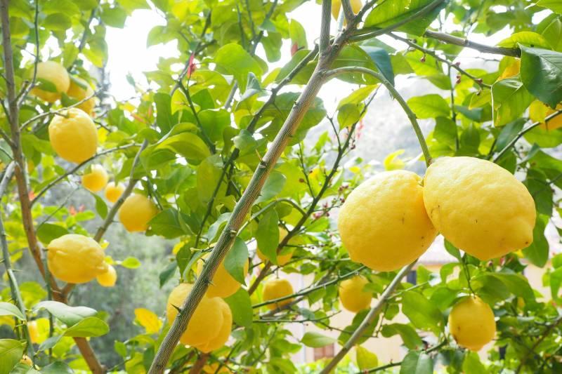 Incredible Amalfi drive: Positano, Amalfi & Lemon tour